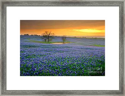 Field Of Dreams Texas Sunset - Texas Bluebonnet Wildflowers Landscape Flowers  Framed Print by Jon Holiday