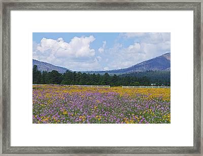 Field Of Dreams Framed Print by Tom Kelly