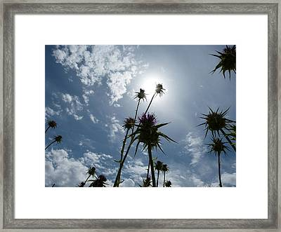 Field Of Dry Flowers Framed Print by Janina  Suuronen