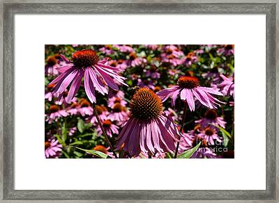 Framed Print featuring the photograph Field Of Echinaceas by Scott Lyons