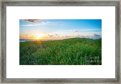 Field Of Flowers At Sunrise  Framed Print by Tammy Smith
