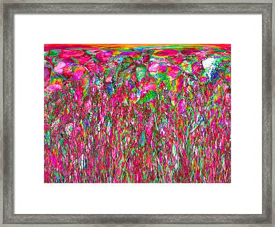 Field Of Flowers At Sunset Framed Print by Stephanie Grant