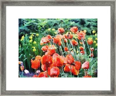 Field Of Flowers Framed Print by Jeff Kolker