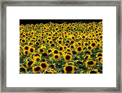 Field Of Flowers Framed Print by Mitchell Brown