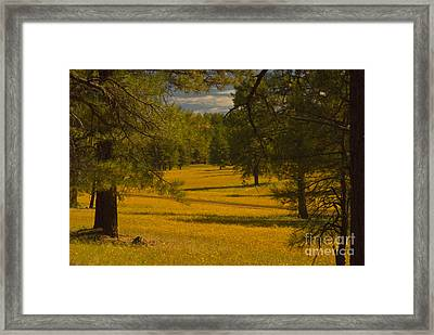 Field Of Flowers Framed Print