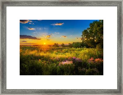 Field Of Flowers Sunset Framed Print by Mark Goodman