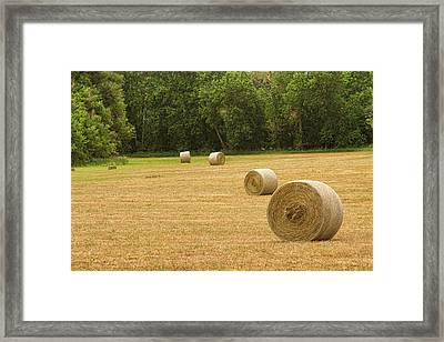 Field Of Freshly Baled Round Hay Bales Framed Print by James BO  Insogna