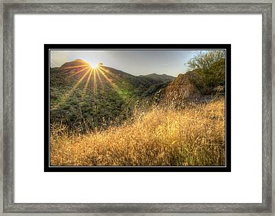 Field Of Gold Framed Print by Kelly Gibson