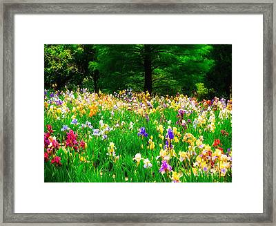 Field Of Iris Framed Print