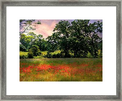 Field Of Poppies Framed Print by Anne McDonald