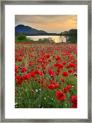 Field Of Poppies At The Lake Framed Print by Guido Montanes Castillo