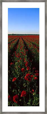 Field Of Poppies Framed Print