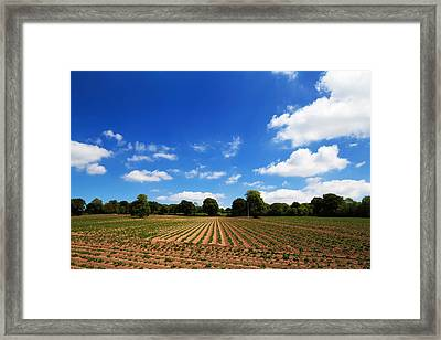 Field Of Potatoes, Near Inistioge Framed Print by Panoramic Images