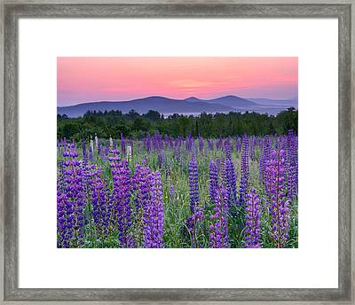 Field Of Purple Framed Print