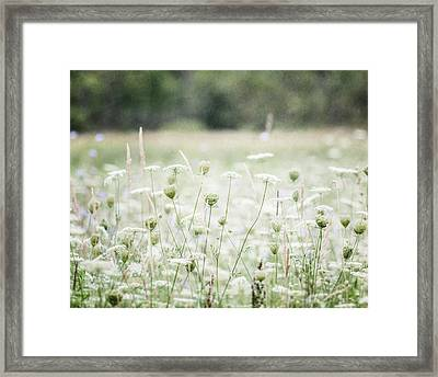 Field Of Queen Anne's Lace Flowers  Framed Print by Lisa Russo