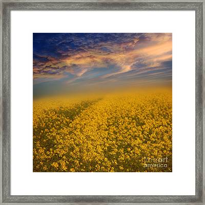 Field Of Rapeseed  Framed Print by Monika Pachecka