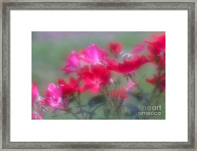 Framed Print featuring the photograph Field Of Roses by Mary Lou Chmura
