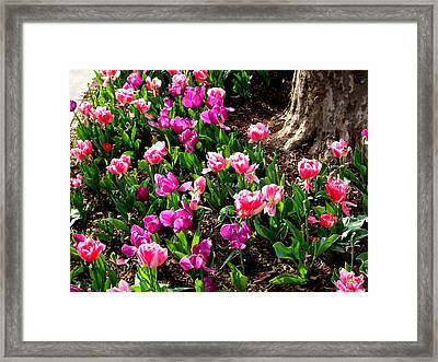 'field Of Springtime'  Framed Print