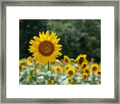 Field Of Sun Framed Print by Brian Young