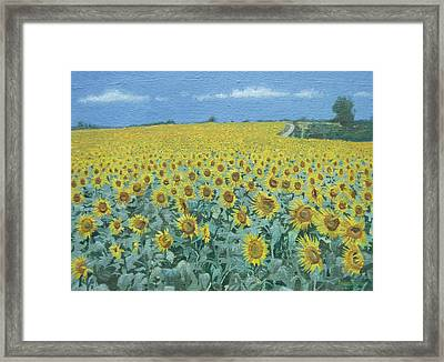 Field Of Sunflowers, 2002 Oil On Canvas Framed Print by Alan Byrne
