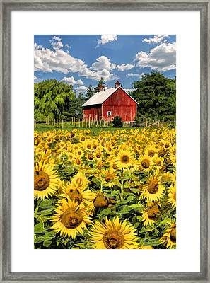 Field Of Sunflowers Framed Print by Christopher Arndt