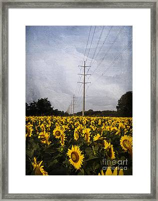 Field Of Sunflowers Framed Print by Elena Nosyreva