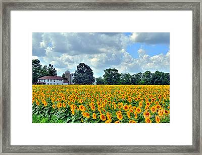 Field Of Sunflowers Framed Print by Kathleen Struckle