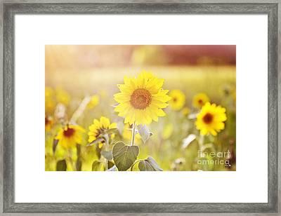 Field Of Sunshine Framed Print by Scott Pellegrin