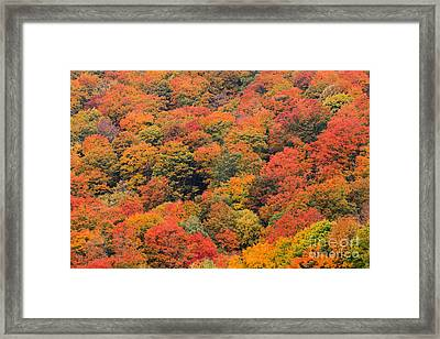 Field Of Trees From Above During Fall Foliage. Framed Print