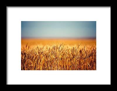 Wheat Framed Prints