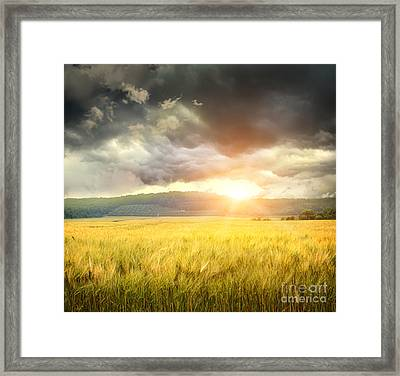 Field Of Wheat With Ominous Clouds  Framed Print by Sandra Cunningham