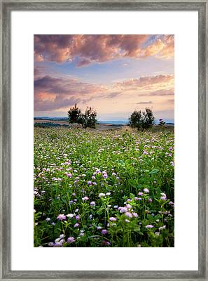 Field Of Wildflowers At Sunset Framed Print by Brian Jannsen