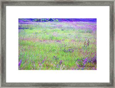 Field Of Wildflowers Framed Print by Rosemarie E Seppala