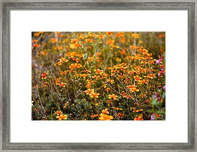 Field Of Wildflowers Framed Print