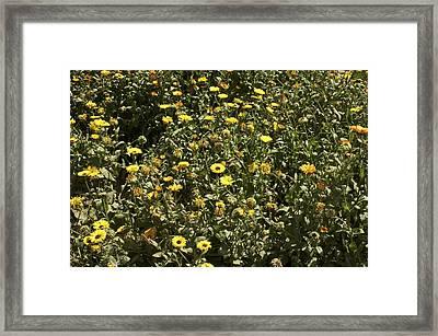 Field Of Yellow Flowers Inside The Garden Of 5 Senses Framed Print by Ashish Agarwal