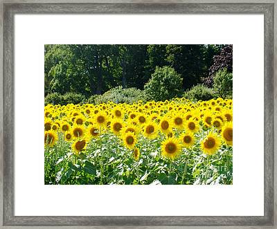 Field Of Yellow Framed Print