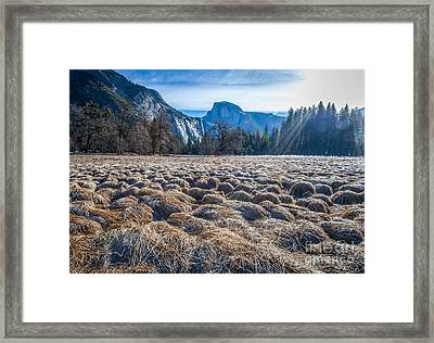Field View Framed Print