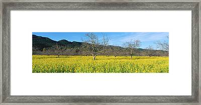 Field With Wildflowers And Budding Trees Framed Print by Panoramic Images