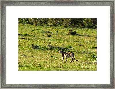 Field Work Framed Print by Syed Aqueel