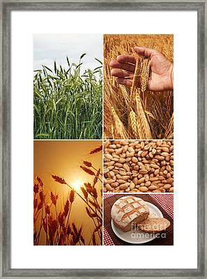 Fields And Grain Collage Art Framed Print by Boon Mee