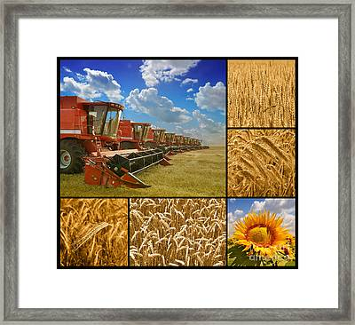 Fields And Grain Collage Framed Print by Boon Mee
