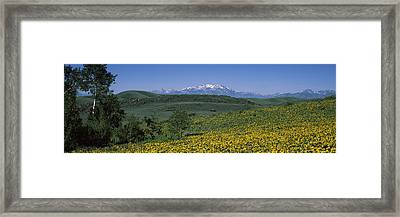 Fields Humboldt National Forest Nv Usa Framed Print
