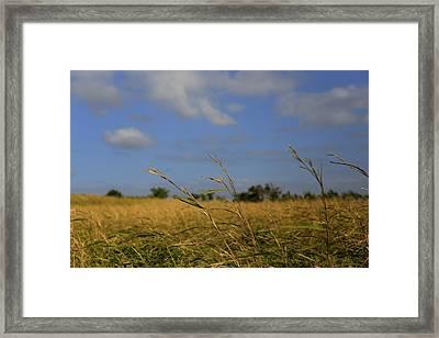 Fields Framed Print by Mario Legaspi