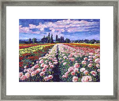 Fields Of Dahlias Framed Print by David Lloyd Glover