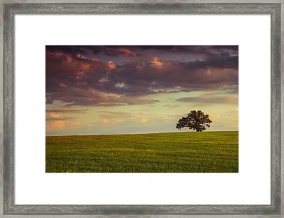 Fields Of Deleon Framed Print