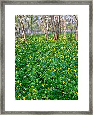 Fields Of Gold Framed Print by Andrew Martin