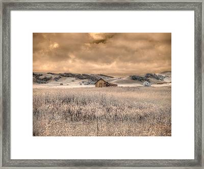 Fields Of Gold Framed Print by Jane Linders