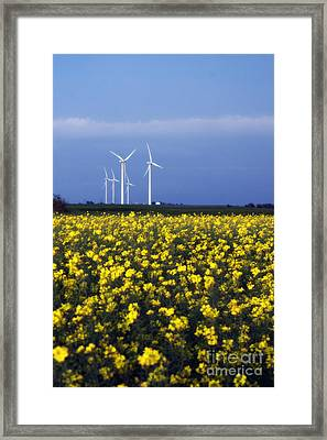 Fields Of Gold Framed Print by Jim McCain