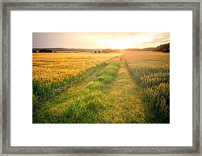 Fields Of Gold Framed Print by Teemu Tretjakov