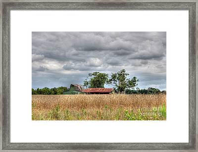 Fields Of Golden Grain Framed Print